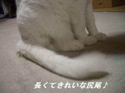 長くてきれいな尻尾♪