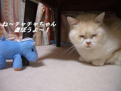 チャチャちゃん遊ぼうよ~