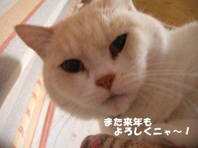 また来年もよろしくニャ~!