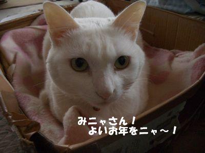 みにゃさんよいお年をニャ~!