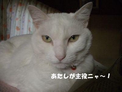 あたしが主役ニャ~!