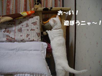 お~い!遊ぼうニャ~!