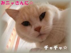 縺ソ縺ォ繧・&繧薙↓_convert_20090214195222