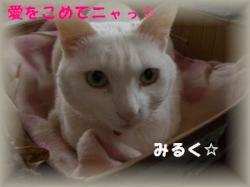 諢帙r縺薙a縺ヲ繝九Ε縺」笘・convert_20090214195304