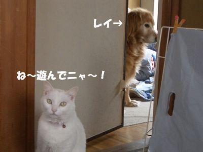 ね~遊んでニャ~