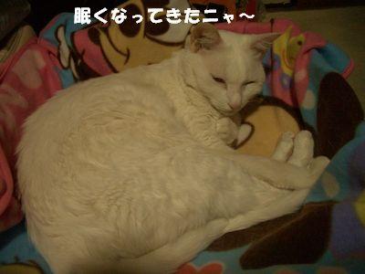 眠くなってきたニャ~