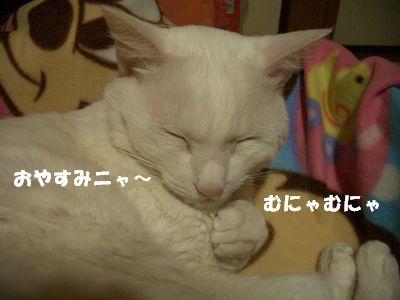 おやすみニャ~