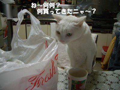 ね~何々?なに買ってきたニャ~?