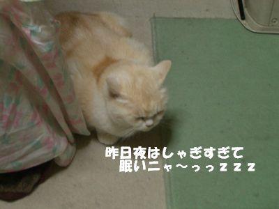 昨日夜はしゃぎすぎて眠いニャ~