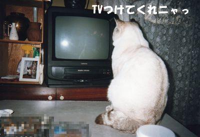 TVつけてくれニャっ