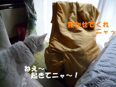 ねえ~起きてニャ~!