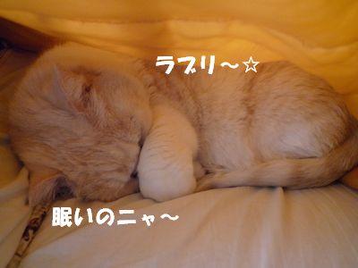 眠いのニャ~
