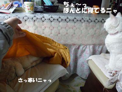 ちぇ~っほんとに寝てるニャ