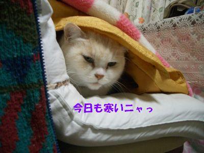 今日も寒いニャっ