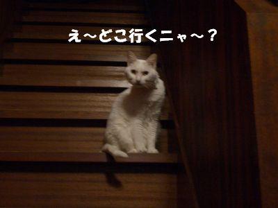 え~どこ行くニャ~?