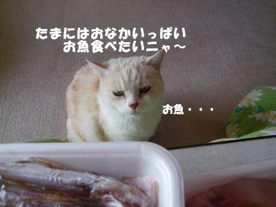 たまにはおなかいっぱいお魚食べたいニャ~