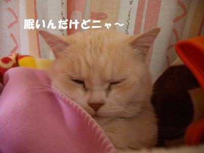 眠いんだけどニャ~