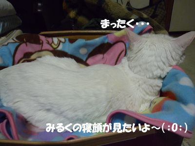 みるくの寝顔がみたいよ~(;O;)