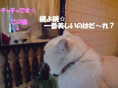 鏡よ鏡☆一番美しいのはだ~れ?