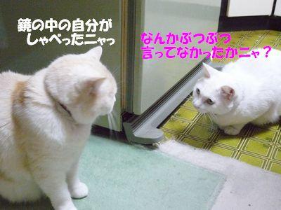 鏡のなかの自分がしゃべったニャっ