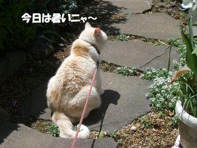 今日は暑いニャ~
