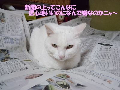 新聞の上ってこんなに居心地いいのにニャ~