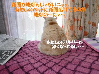 新聞がいやなんじゃないニャ~