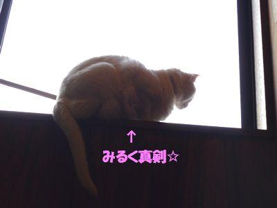 みるく真剣☆
