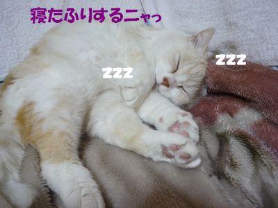 寝たふりするニャっ