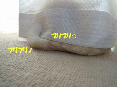フリフリ♪プリプリ☆
