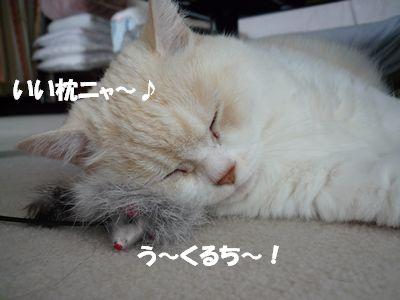 いい枕ニャ~♪