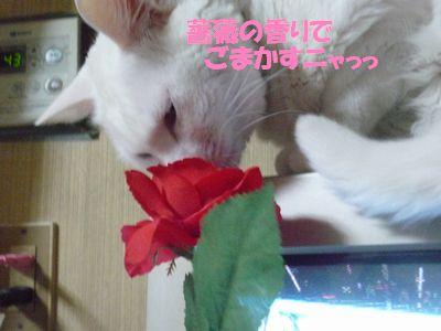 薔薇の香りでごまかすニャっ