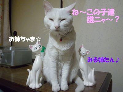 ね~この子達誰ニャ~?