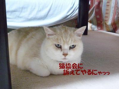 猫協会に訴えてやるにゃっ