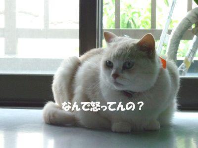 なんで怒ってんの?