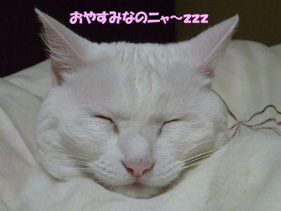 おやすみなのニャ~zzz