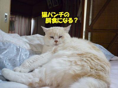 猫パンチの餌食になる?