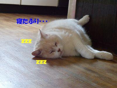 寝たふり・・・