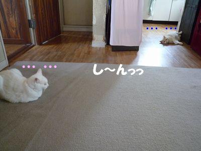 し~んっっ