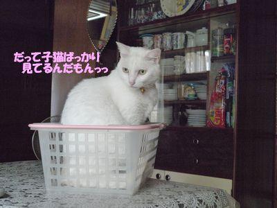 だって子猫ばっかりみてるんだもんっっ
