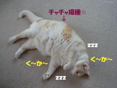 チャチャ爆睡☆