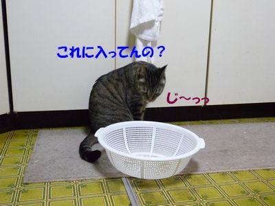これに入ってんの?