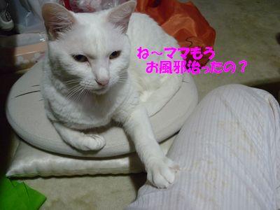 ね~ママもうお風邪治ったの?