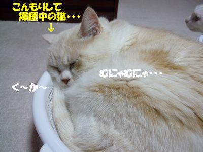こんもりして爆睡中の猫・・・