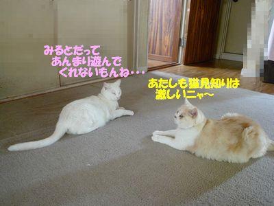 あたしも猫見知りは激しいニャ~