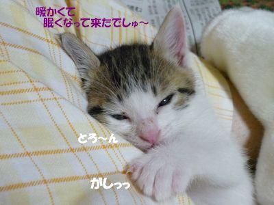 暖かくて眠くなってきたでしゅ~