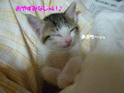 おやすみなしゃい♪