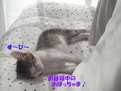 お昼寝中のおぼっちゃま♪