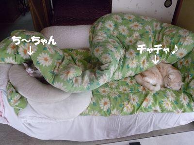ち~ちゃん&チャチャ