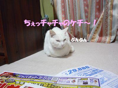 ちぇっチャチャのけち~!